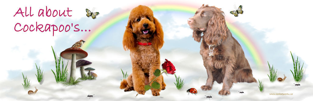 1 Cockapoo4u header ... All aout Cockapoos signed