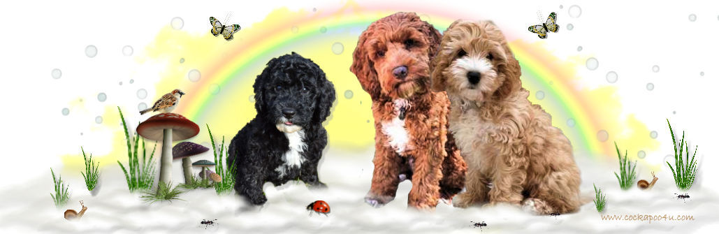 1 Puppy Header signed