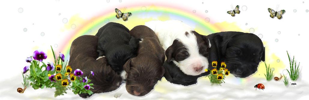 1a a Pups