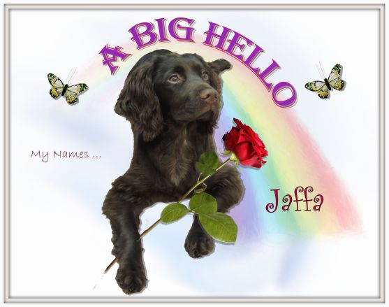 A Big Hello My Names Jaffa