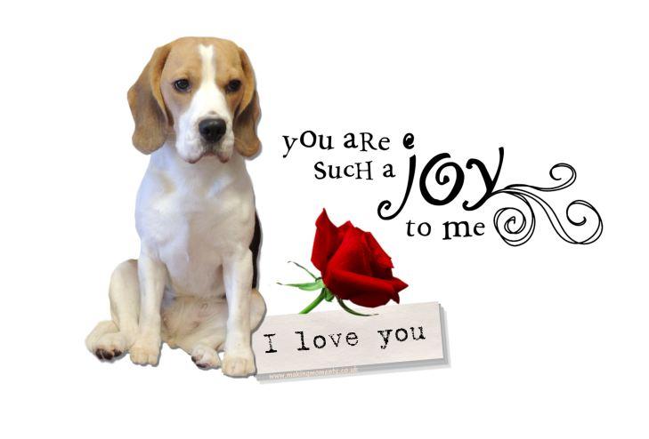A Joy To Me I Love You