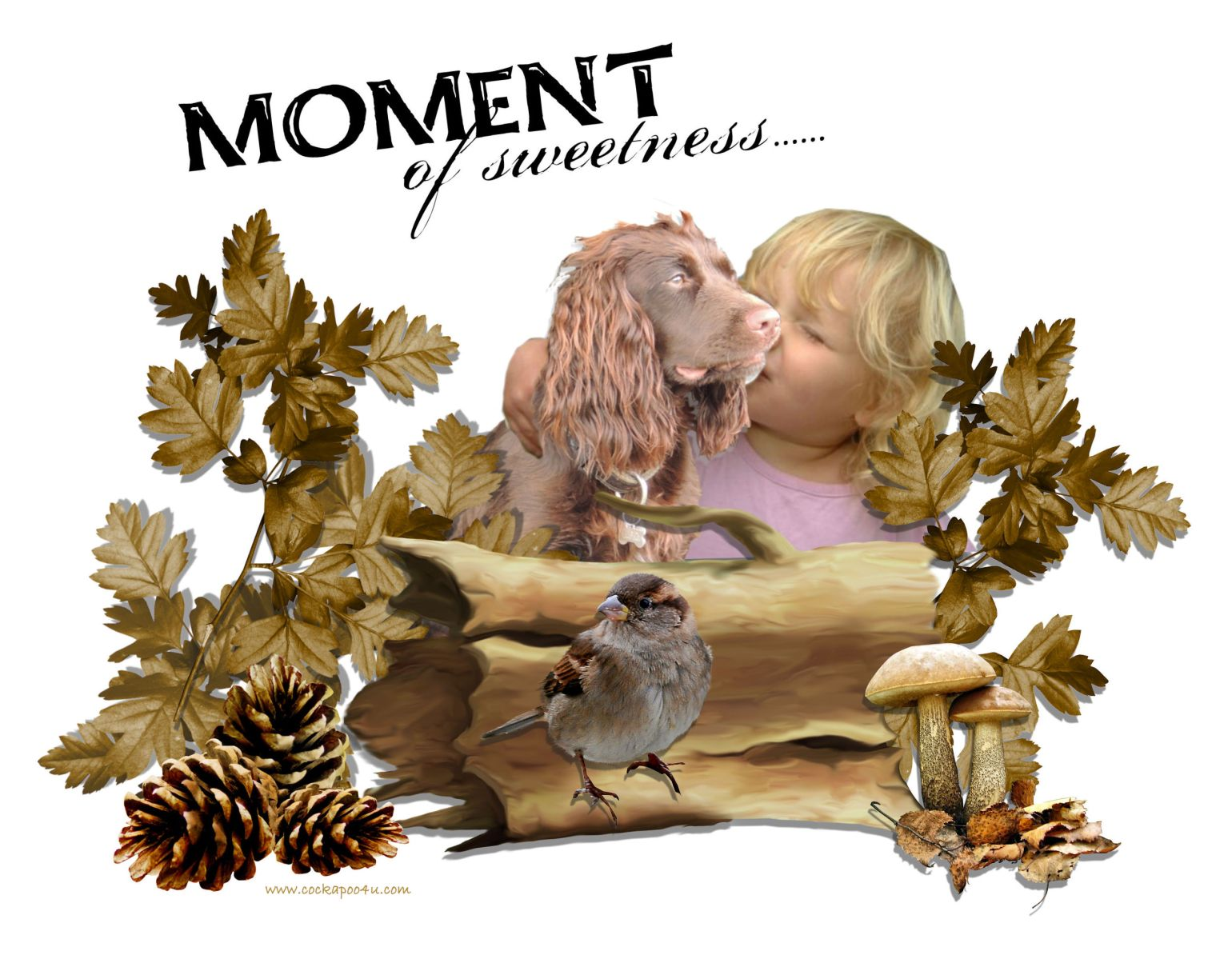 A Moments Of Sweetness signed