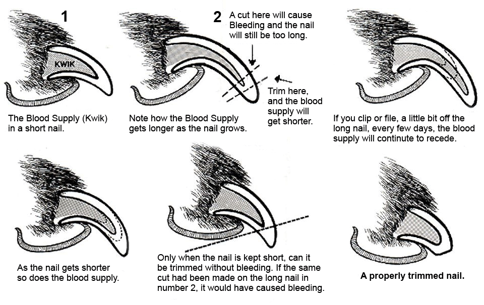 Nail-Trimming-Diagram
