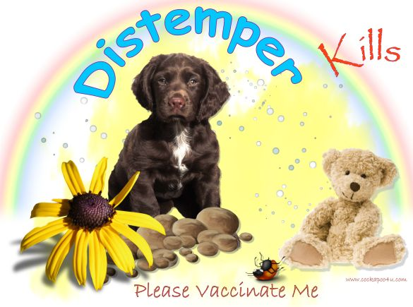1 A Canine Distemper Please vaccinate Me