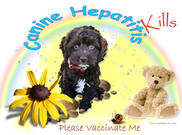 1 A Canine Hepatitis Kills 1a a Please vaccinate Me