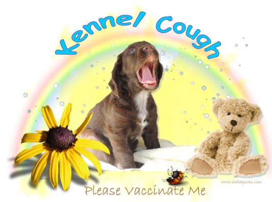 1 A Kennel Cough Please Vaccinate Me