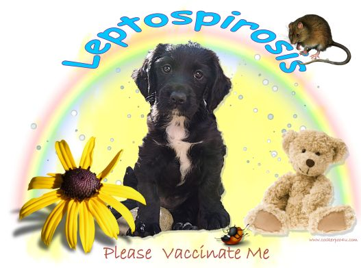 1 A Leptospirosis Jett please Vaccinate me