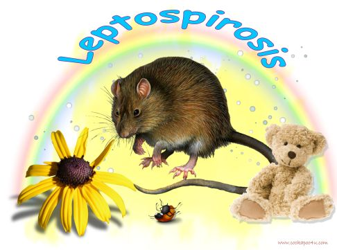 1 A Leptospirosis signed