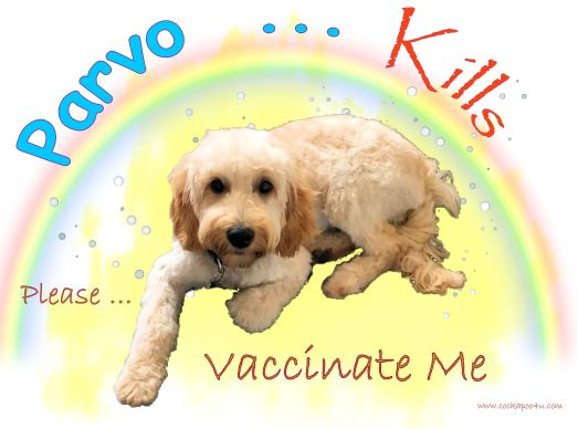 1 A Parvo Kills Please Vaccinate Me signed