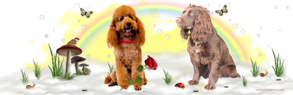 1a Cockapoo4u header signed
