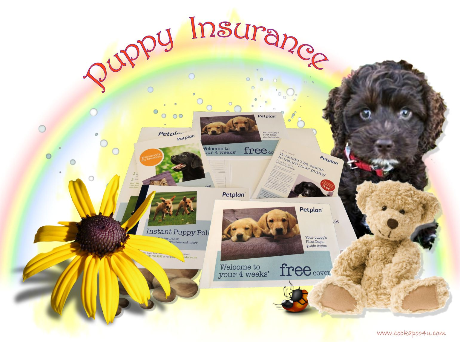 1 A Puppy Insurance signed