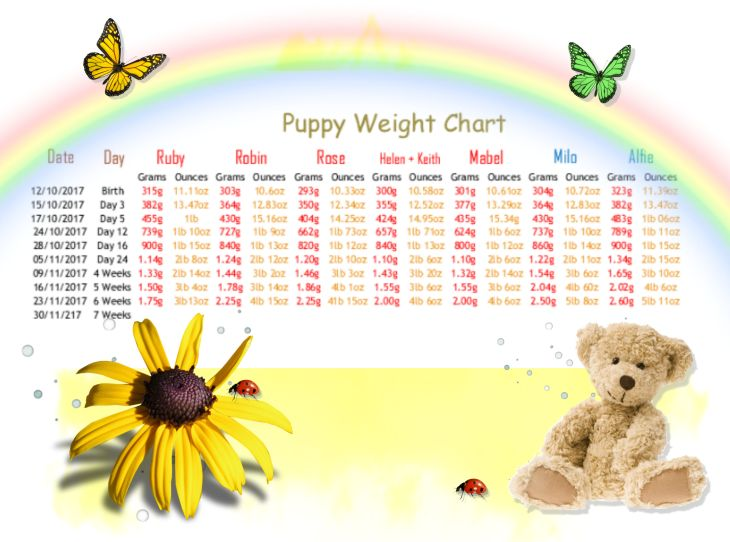 1 a weigh in week 6