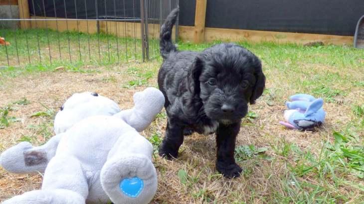 Black Puppy a