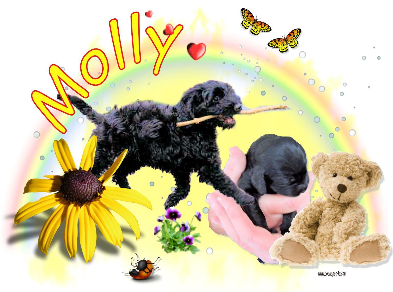 1 Molly.jpg