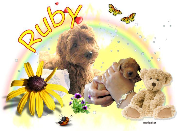 1 Ruby.jpg