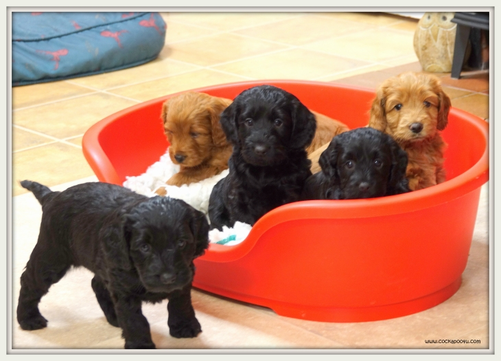 Pups Bed