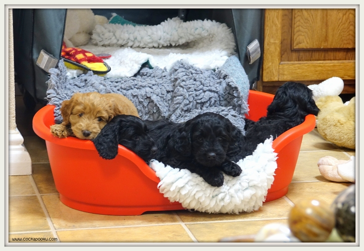 Pups Red Bed.JPG