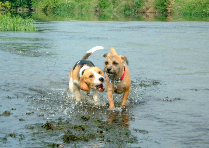 River Splash aa.JPG