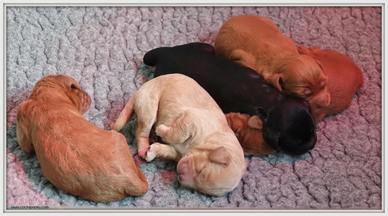 26-04-2019 Pups (1)