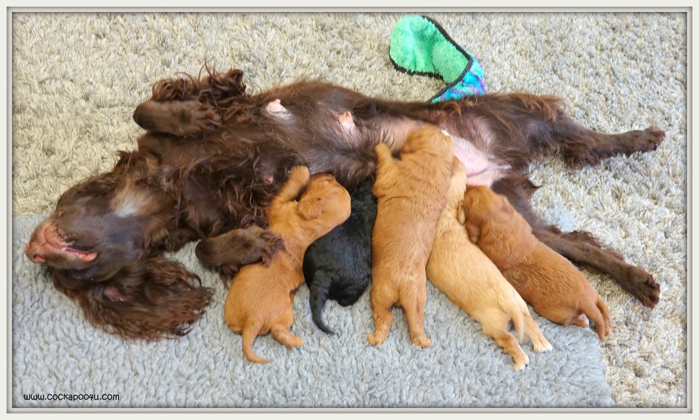 08-05-219 Jaffa Pups (2).JPG