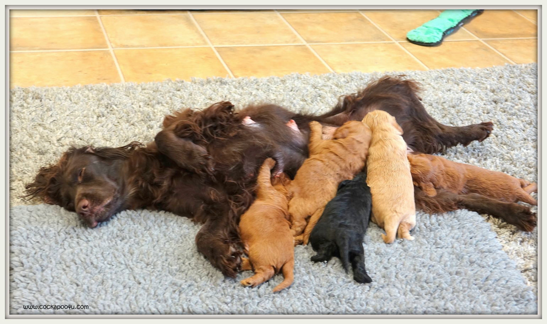 08-05-219 Jaffa Pups (3)
