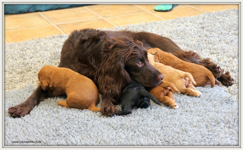 08-05-219 Jaffa Pups (4)