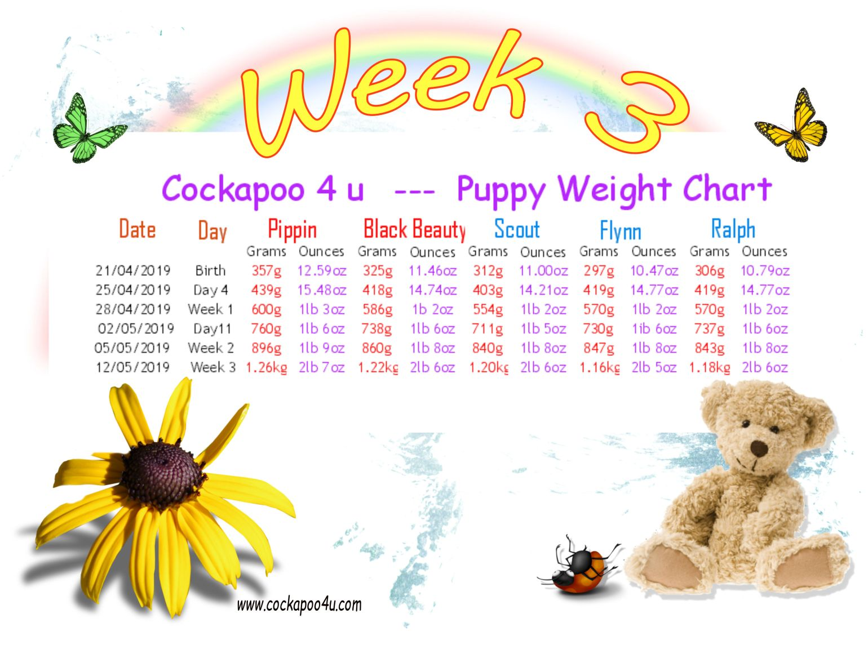 1 Week 3