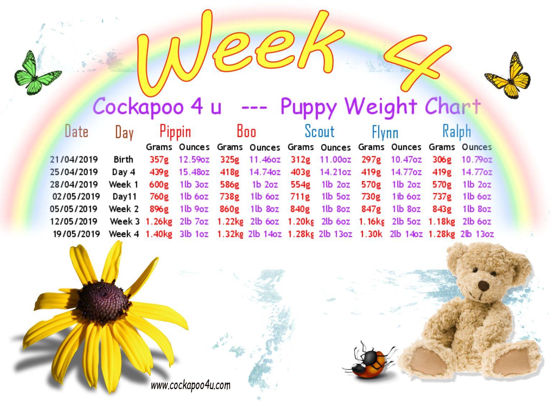 1 Week 4