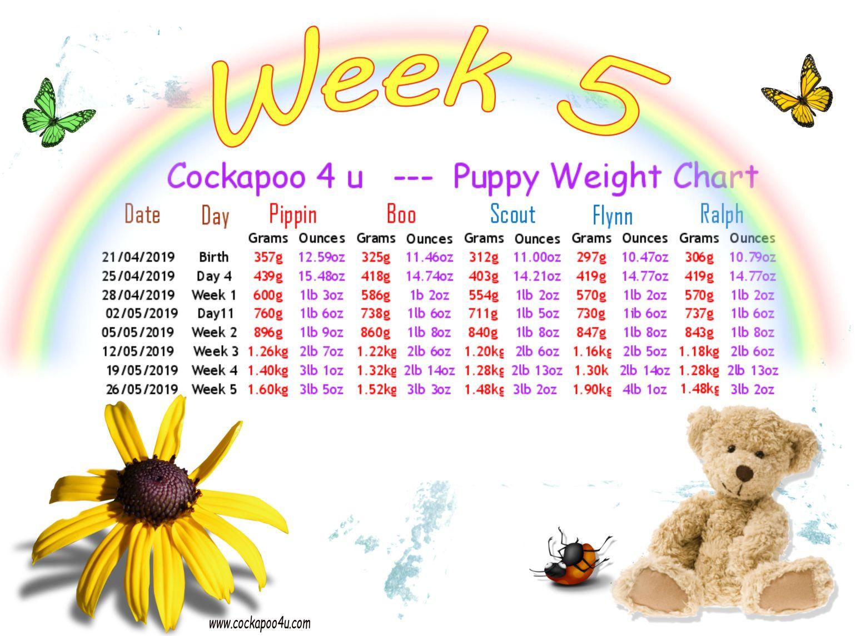1 Week 5