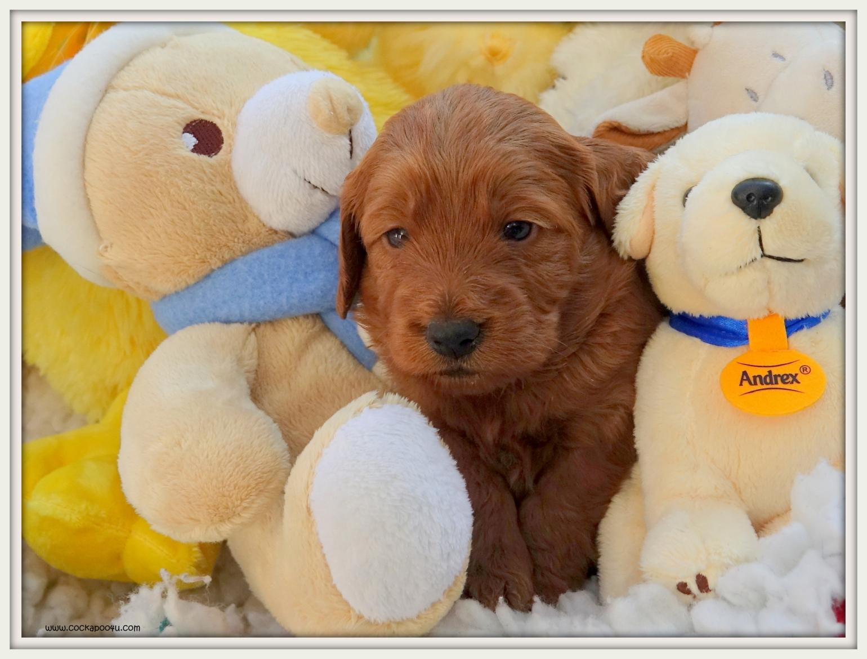 16-05-2019 Toys Ralph (7)