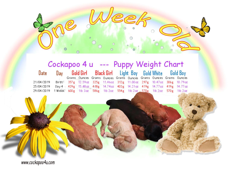 Weight Chart - 1 Weeka