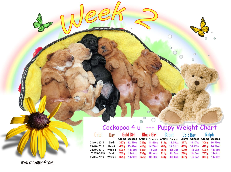 Weight Chart - Week 2.jpg