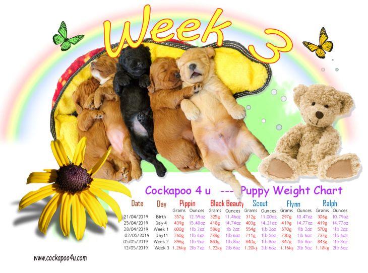 Weight Chart - WEEK 3