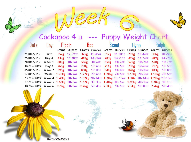 1 Week 6