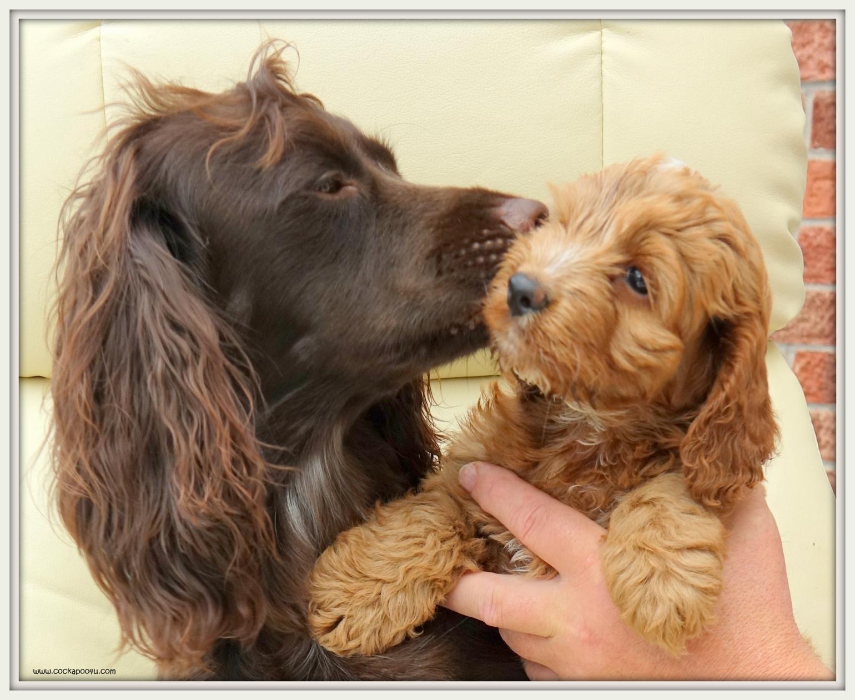 Pippin Kiss Of Love (2) Framed best.JPG