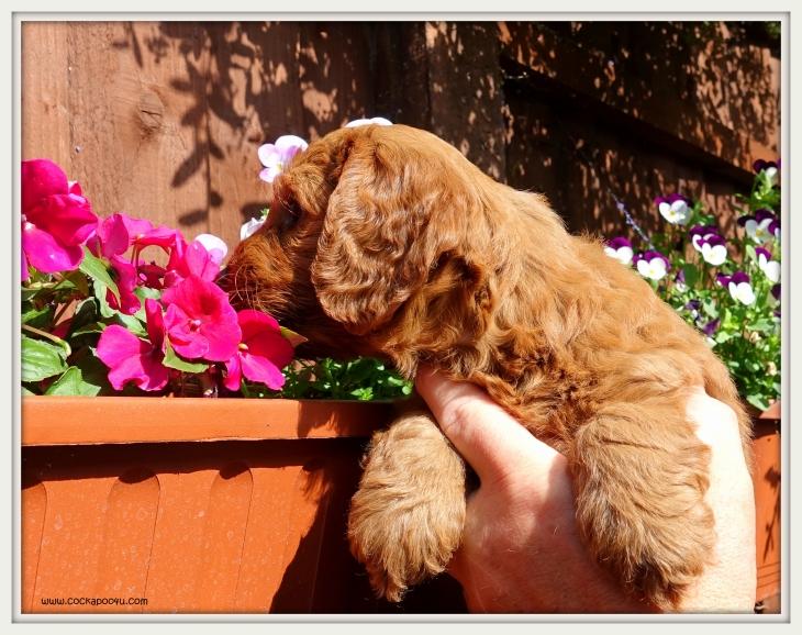 Ralph (2)