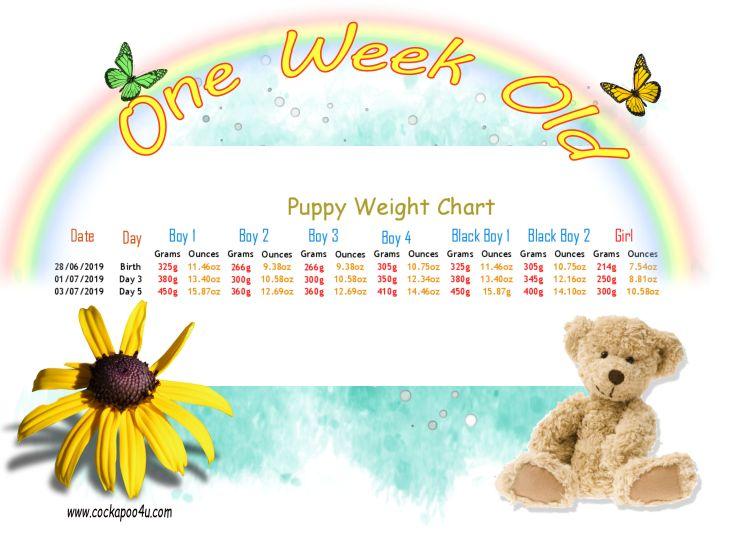 Weight Chart - 1 Week a.jpg