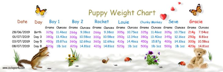 Weight chart Day 8aaa