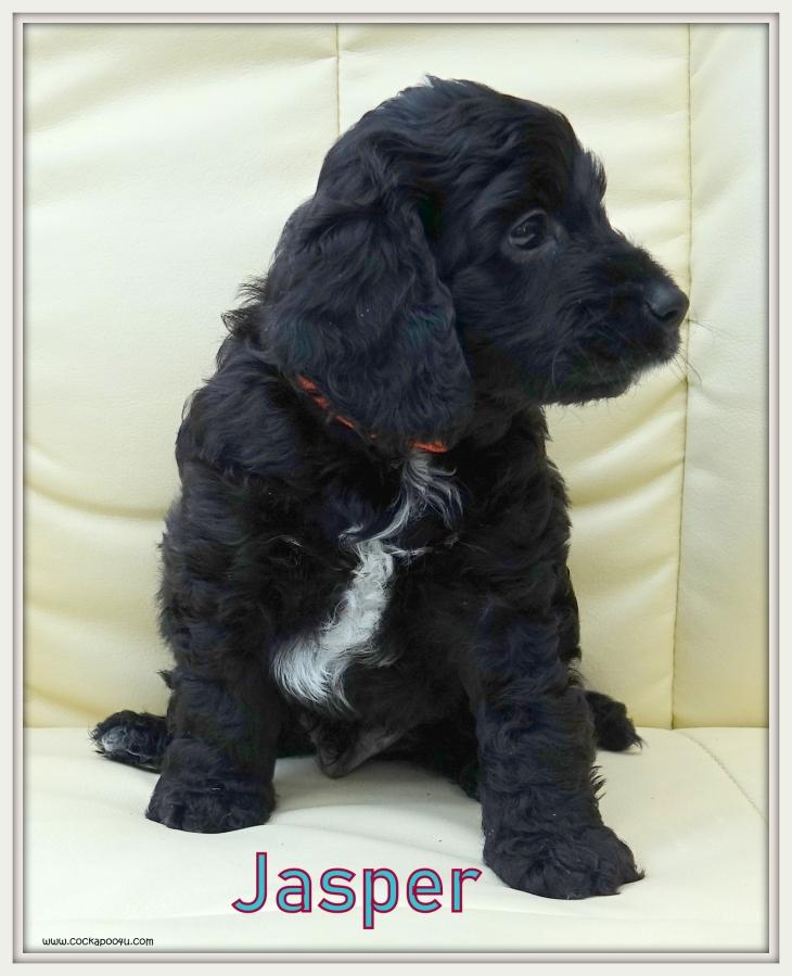 1. Jasper Named.JPG