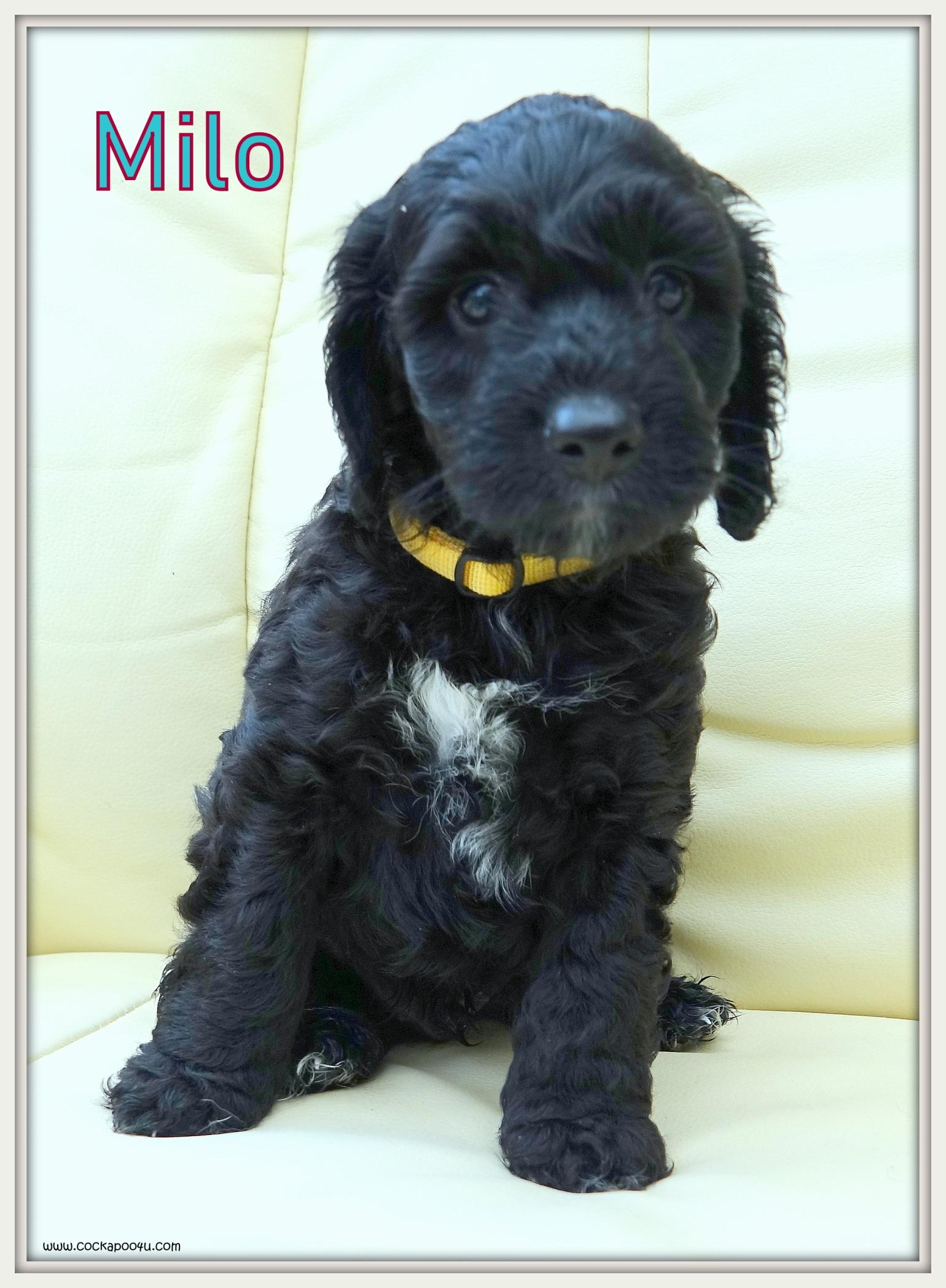 2. Milo Named.JPG