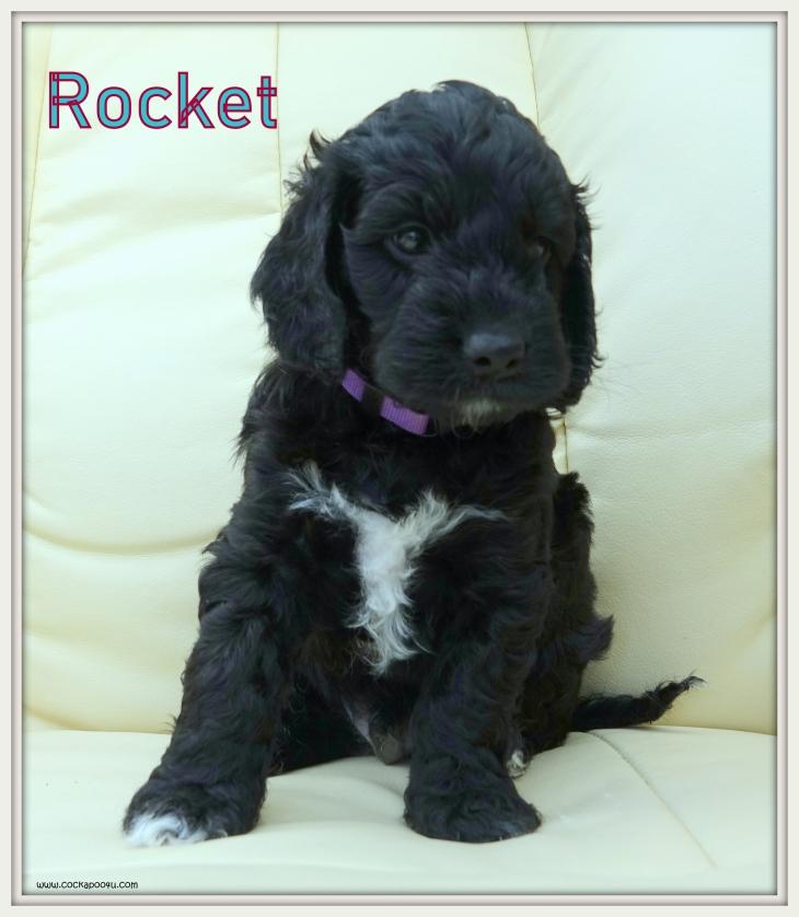 3. Rocket aNamed.JPG