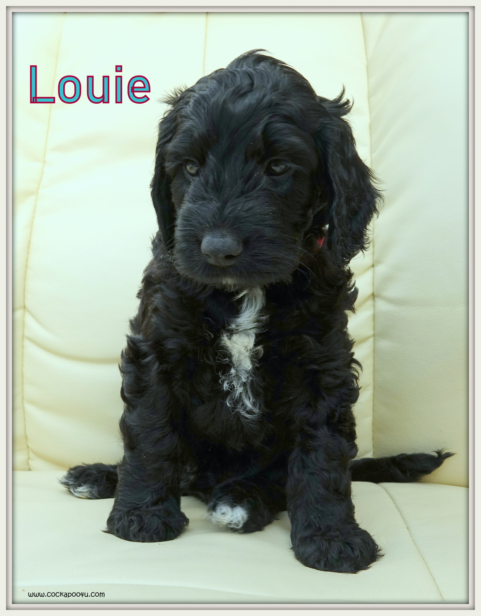 4. Louie aNamed.JPG
