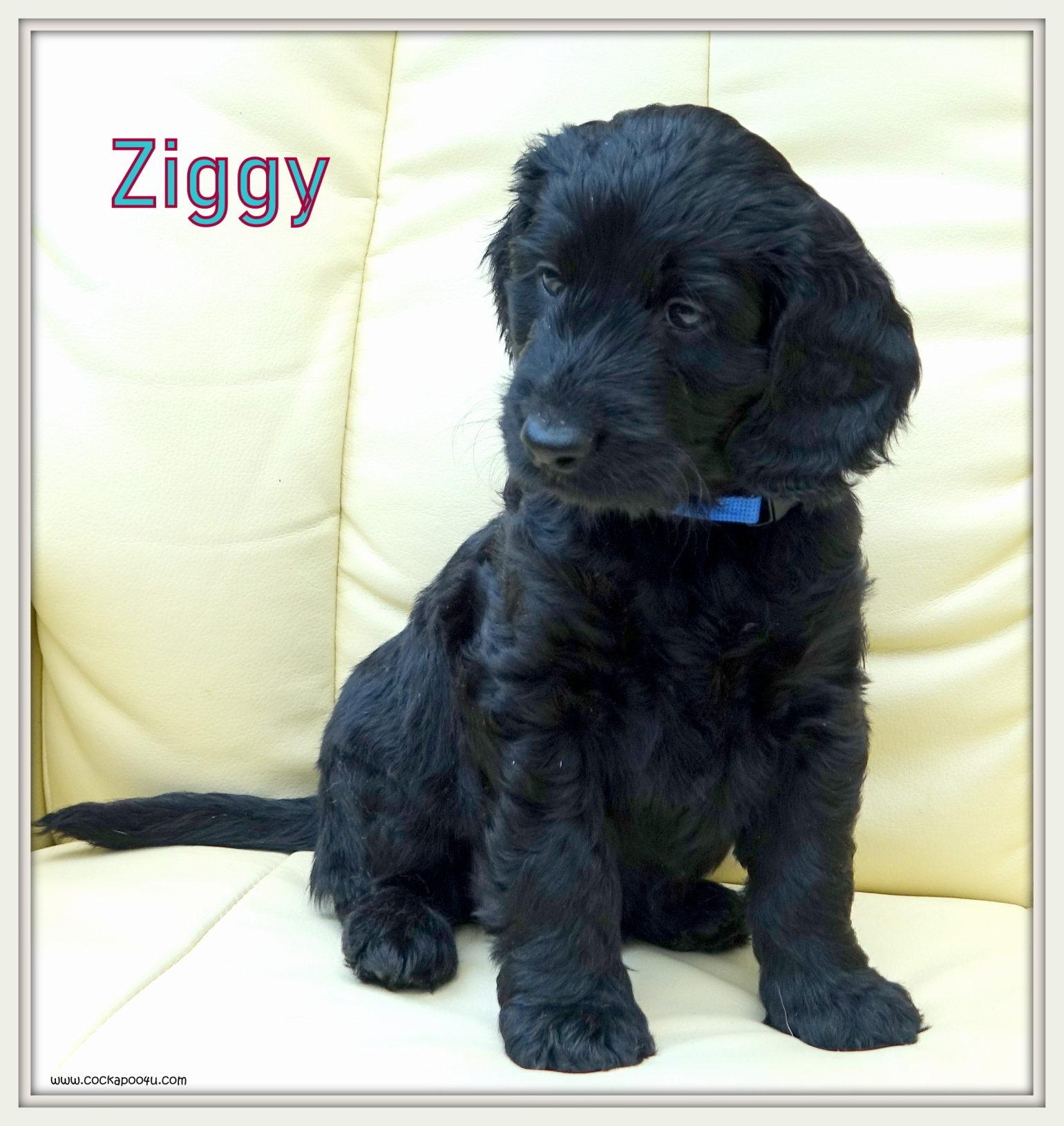 5. Ziggy aaaa Named.JPG
