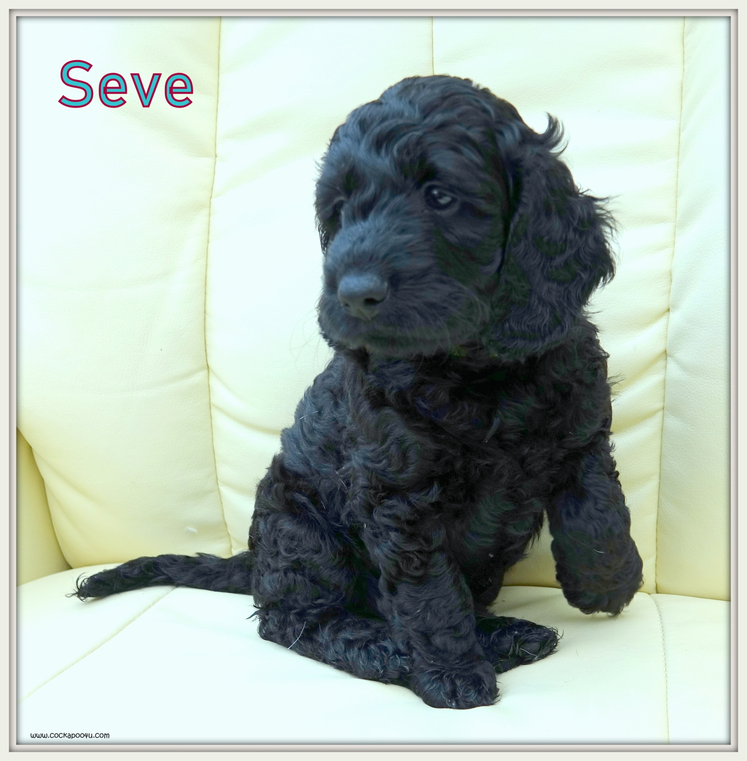 6. Seve Named.JPG
