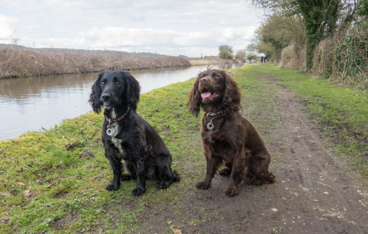 Spaniel's Canal Side